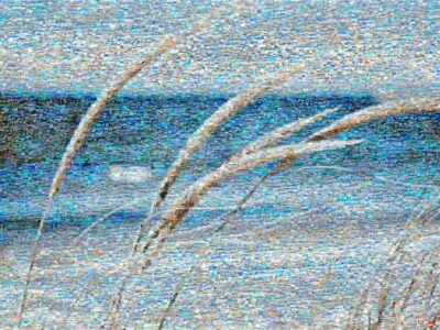 Dune grass is an iconic vision within a beach scene.