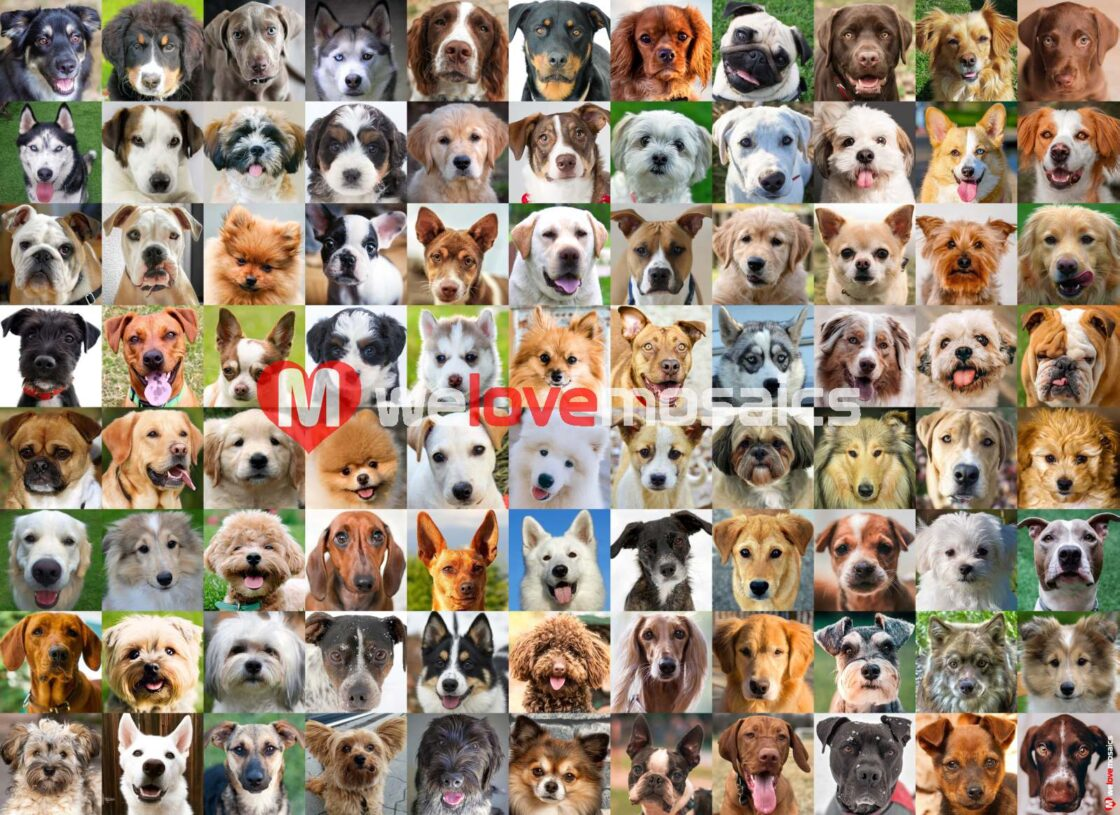 Dogs elicit primal emotions from us that are central to our being. We selected a number of amazing dog breeds to build this impressive Collage.