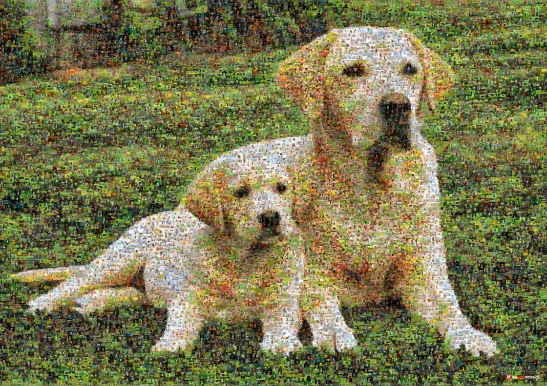 The sweet-faced, lovable Labrador Retriever is one of the world's most popular dog breeds. So loyal.