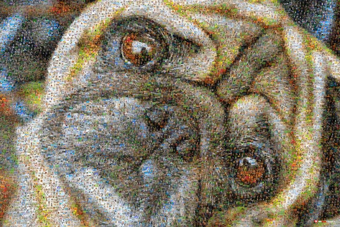 """The Pug has been described as """"a lot of dog in a small space"""". Very inquisitive!"""